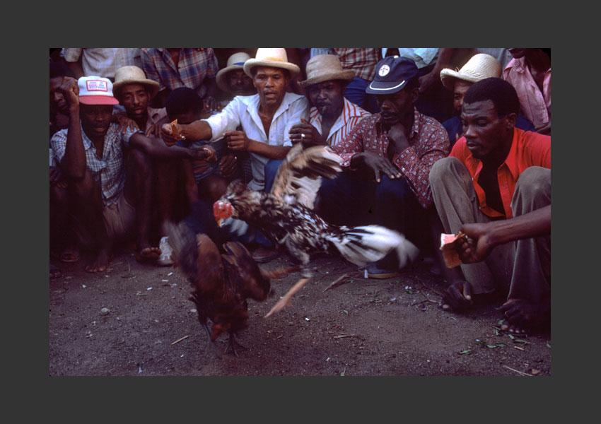 Combat de coqs, Haïti 1985.
