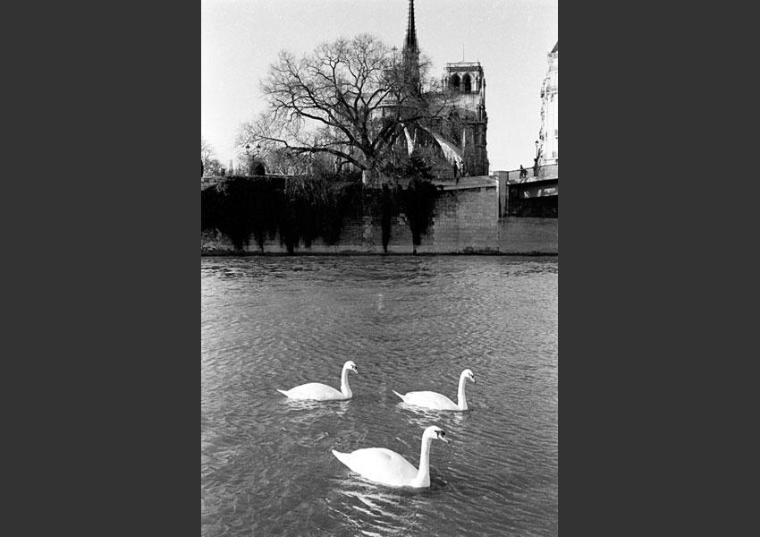 9 - Notre Dame, Paris 1983.